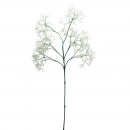 Trachelium, x7, H66cm, bianco